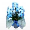 胡蝶蘭の色とその選び方について。胡蝶蘭は本数や花輪数でその種類が分かれますが、胡蝶蘭の色によってもその意味や値段が違ってきます。胡蝶蘭の色とその選び方のポイントを簡単にまとめてみました。蝶蘭園.com青スタンダード3本