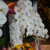 横浜にお祝い胡蝶蘭を当日に贈りたい!