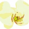 オーキッドスタイル胡蝶蘭とは?