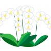 イラスト胡蝶蘭の値段が高い、その秘密について。贈るお花の中でも法人向けの胡蝶蘭の値段は高い!と思っている方も多い、と思います。胡蝶蘭の値段価格の決まり方、胡蝶蘭の選び方、おすすめの胡蝶蘭通販等々について簡単にまとめています。胡蝶蘭値段白-2イラスト400