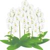 胡蝶蘭値段白イラスト2-400
